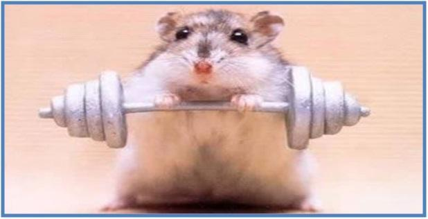 5 Fakta Tentang Tikus - Dedy Akas Website