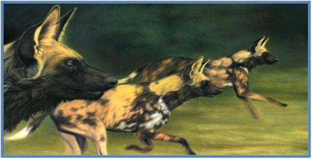 5 Hewan Tercepat di Darat Part II - Anjing Liar Afrika
