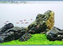 Aqauscape Adalah Taman Di Dalam Air