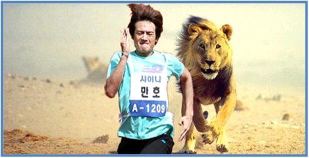 5 Hewan Tercepat di Darat Part II - Singa