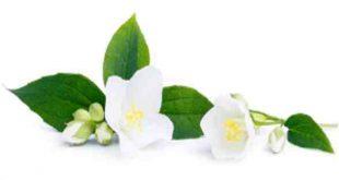 Bunga (Perawan) Part 04