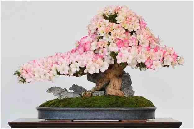 Pohon Bonsai Berbunga, Oleh Wolfgang Putzi