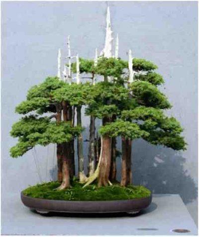 """Pohon Bonsai Goshin """"Pelindung Semangat (Protector Of The Spirits)"""", Oleh John Naka:"""