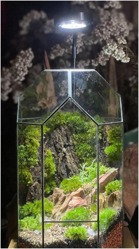Terrarium image by aqua forest